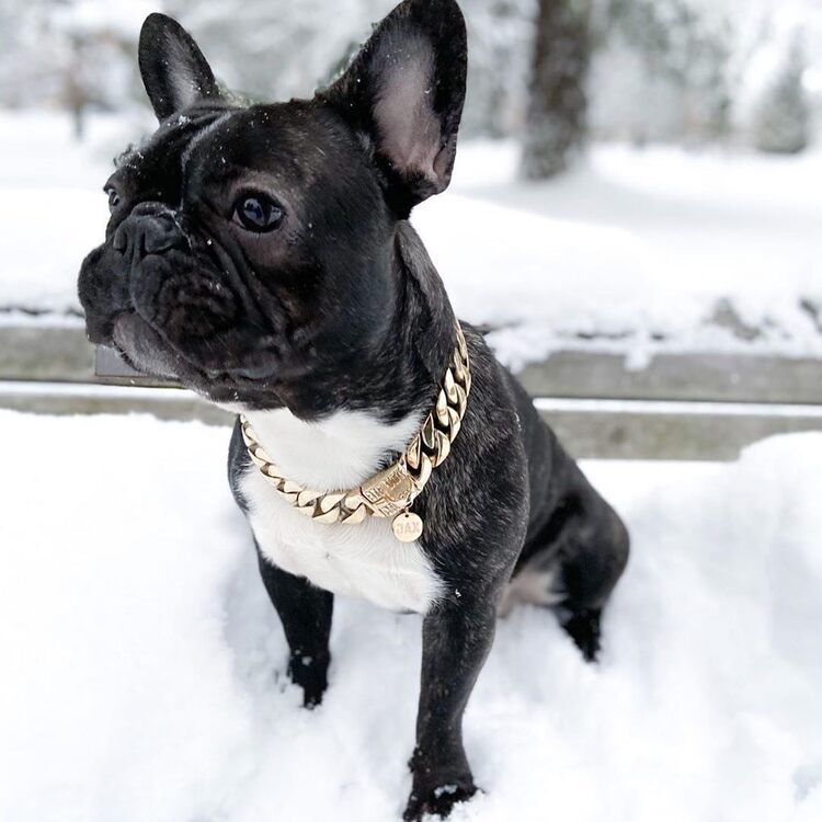 Thick Gold Chain Pets Safety Collar (Adjustable Length)Hot sale-Buy 1 Get 1 FREE