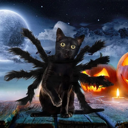Halloween Spider Costume for Dogs Cats - Big Sale Today